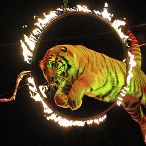 Цирки Майи