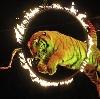 Цирки в Майе