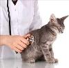 Ветеринарные клиники в Майе